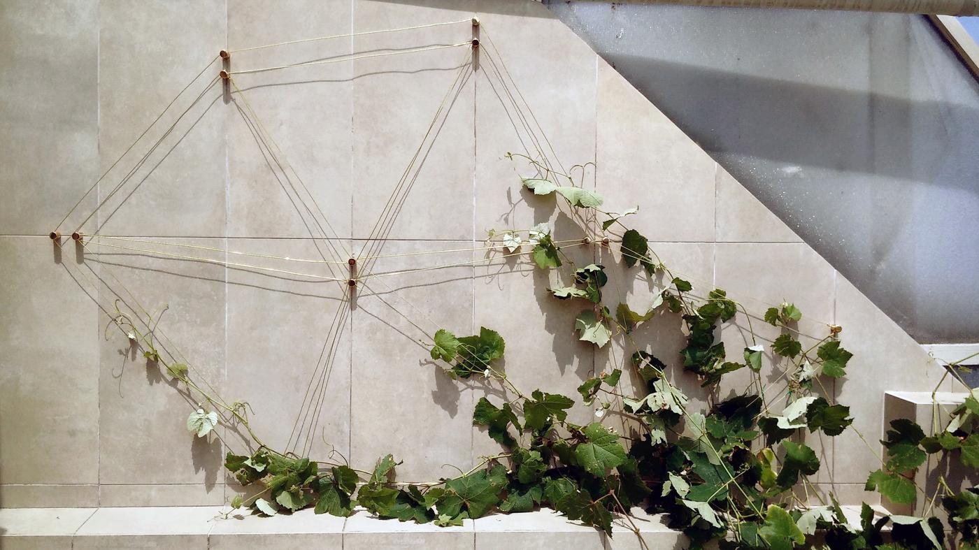 Costellazioni - un progetto che trasfigura sostegni per piante rampicanti in elementi di green design, preziosi in ogni periodo dell'anno   Geometrie stellari   Bottega di Architettura