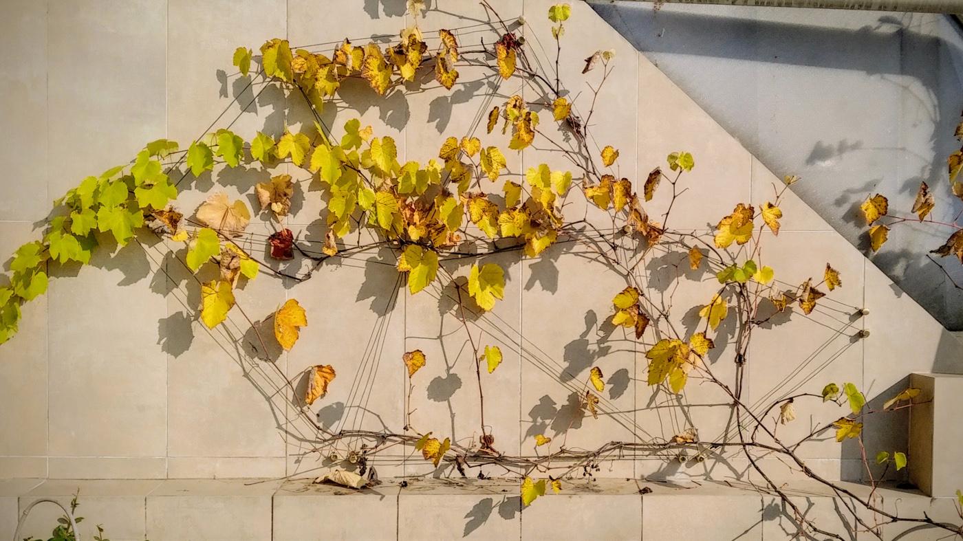 Costellazioni - un progetto che trasfigura sostegni per piante rampicanti in elementi di green design, preziosi in ogni periodo dell'anno   Foliage   Bottega di Architettura